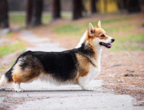 Потомки собак питомника