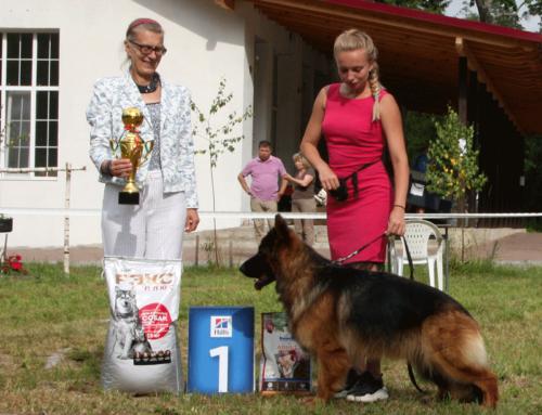 Первые выставки после карантина. Бобруйск 26 июня