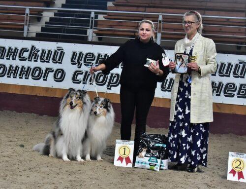 Чемпионат колли в Минске 25 октября 2020 года