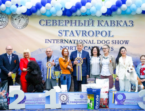 Прекрасная выставка в СТАВРОПОЛЕ CACIB!!!